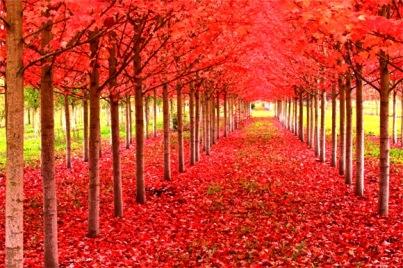 fall-season-wallpapers-hd-5